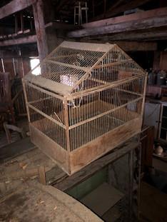 cage oiseaux.jpg