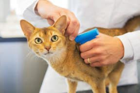 Microchipping saves lives!