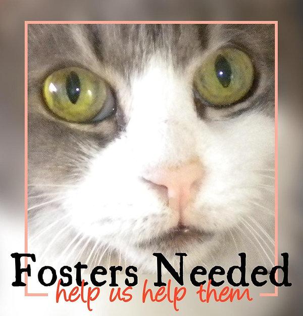 fosters2.jpg