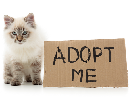 Looking to adopt through ECCP?