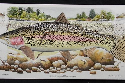 Stoned - Rainbow Trout & Stone Fly Nymphs
