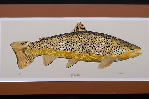 Peter Thompson Limited Edition Brown Trout Print