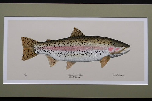 Peter Thompson Limited Edition Rainbow Trout Print