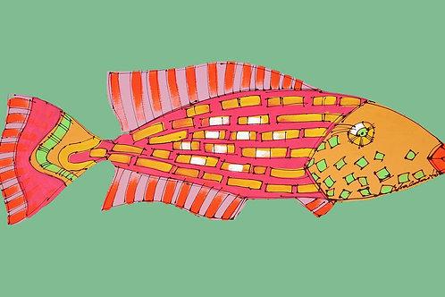Rainbow Parrotfish 2