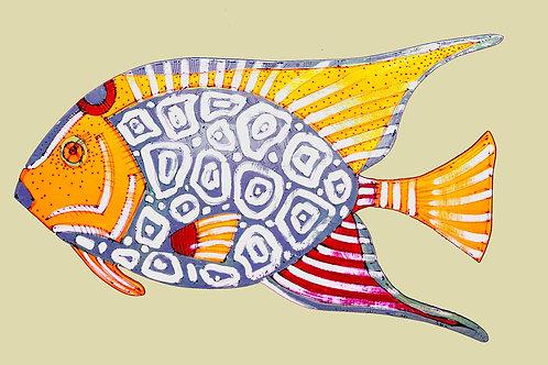 Purple Angelfish