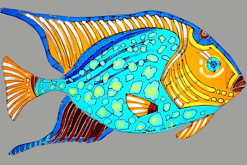 Sky Blue Angelfish