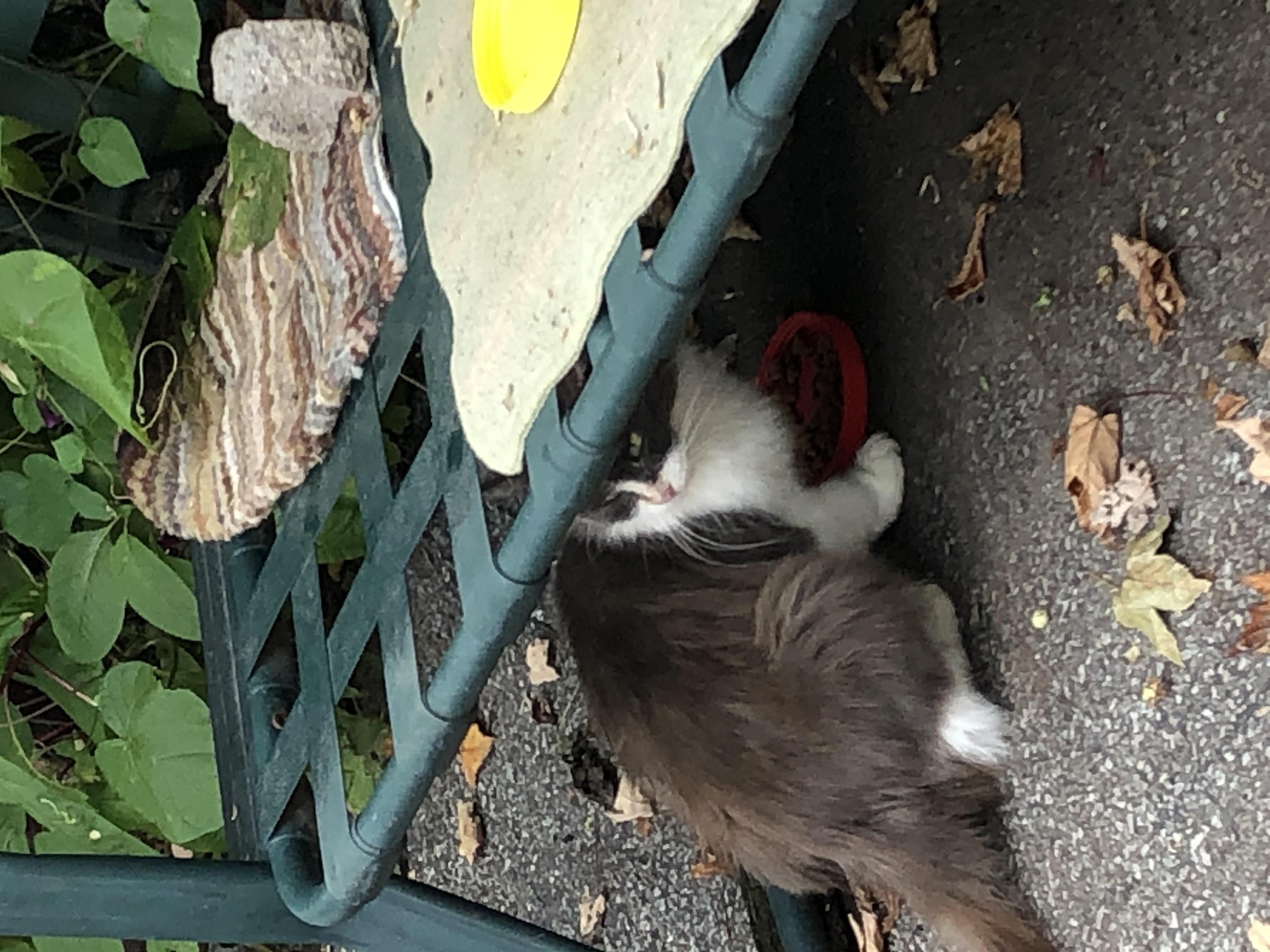 IMG_5001 cat