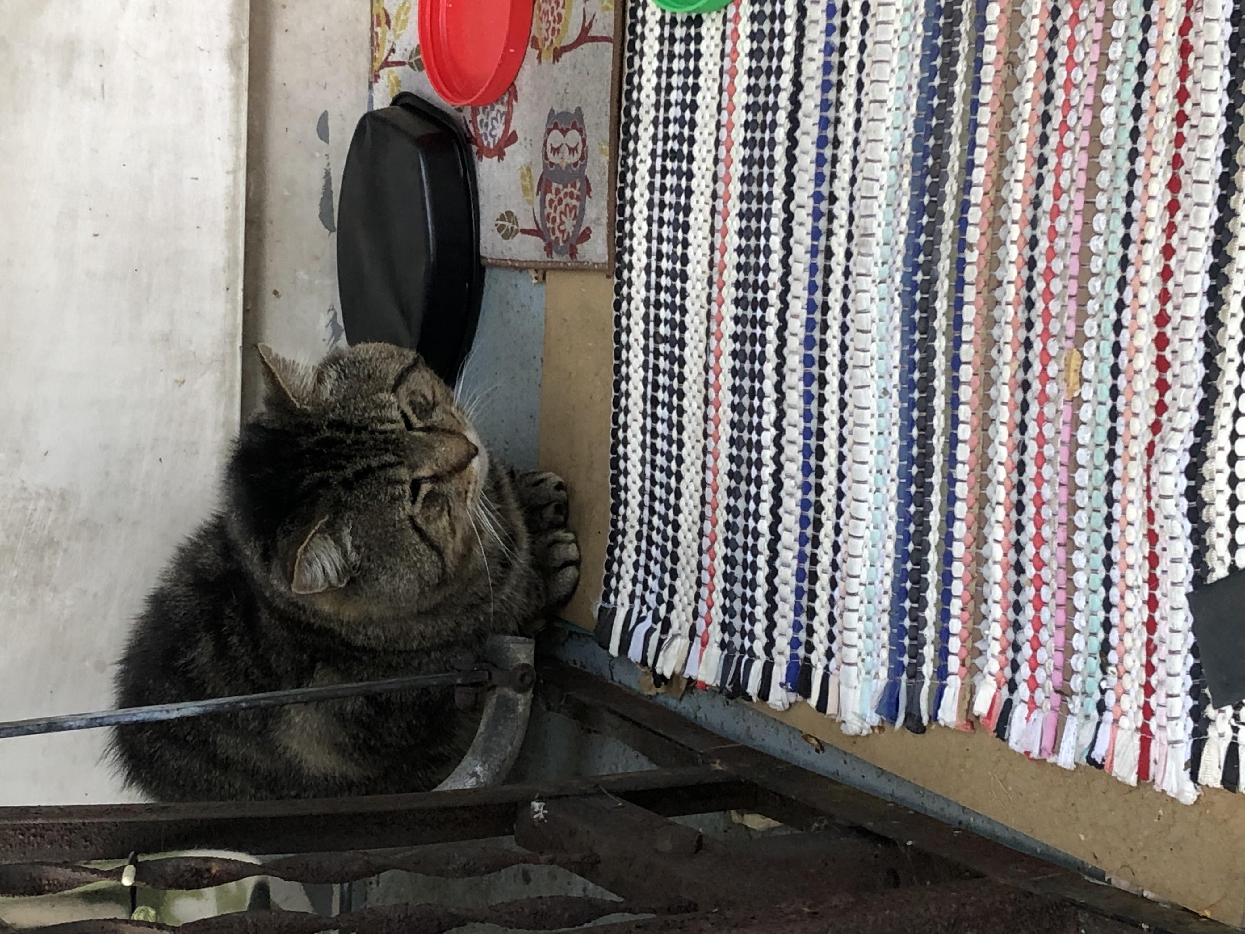 IMG_4992 cat