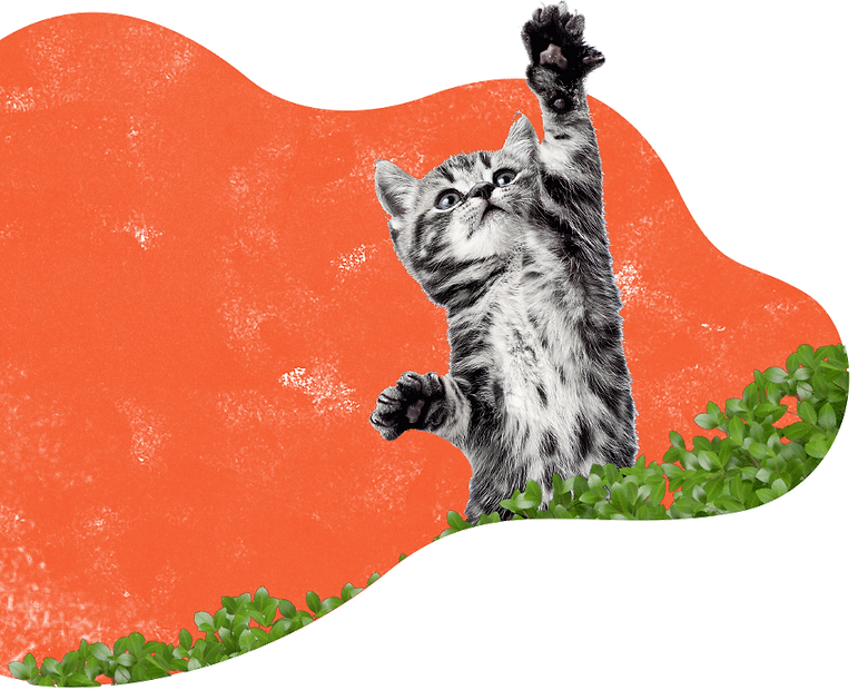 inner_services_cat (1).png