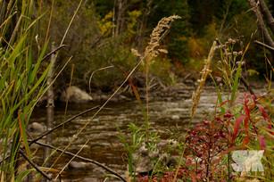 Focused Fall River