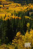 Fall Colors Vertical Shot