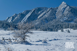 Bluebird Winter Day