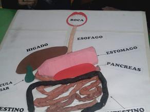 Muestra pedagógica de Ciencias con alumnos de 5º Básico.