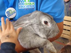 Visita de la mini  granja Educativa