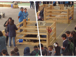 "Video cápsula ""Mini Granja Animal visita  Colegio Las Lilas"""