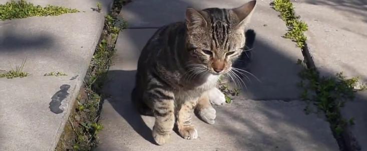 """""""Safari de Gatos"""""""