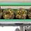 entkernte Taggiasca Oliven werden im Öl verpackt