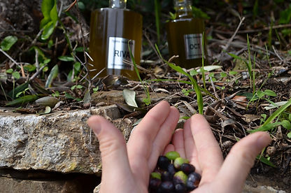Taggiasca Oliven und Olivenöl.JPG