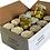 Thumbnail: 12 x CARCIOFINI in Extra Vergine Oliven Öl