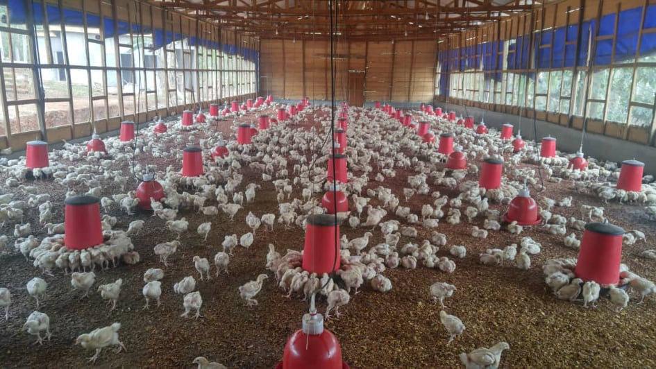 poultry.jpg