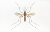 Take Steps to Keep from Contracting West Nile Virus