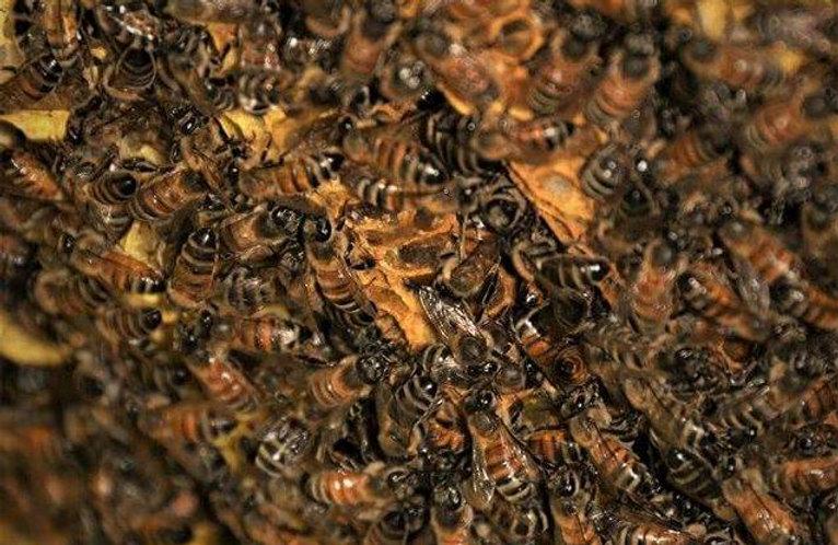 Bees Honey Comb Wax