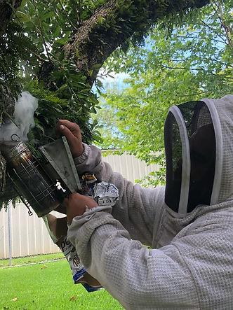 Beehive Removal Smoke Smoker Swarm Veil