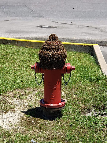 Beehive Swarm Bees Fire Hydrant