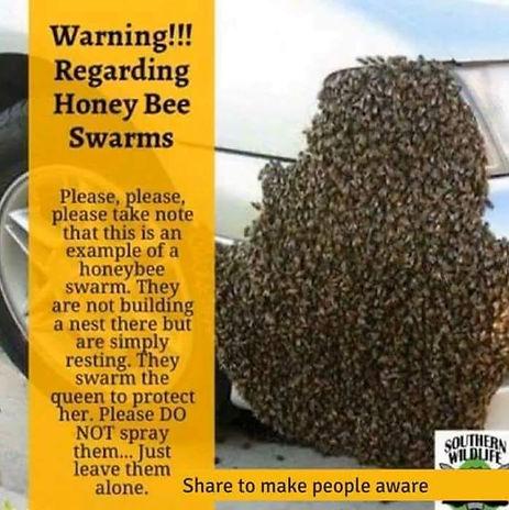 Bee Swarm Infograhic