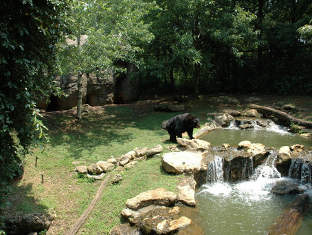 Zoos and Gardens and Schools