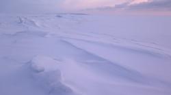 студеное море