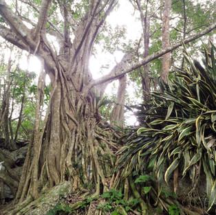 El Corchito, ecological reserve. Progreso Yucatan