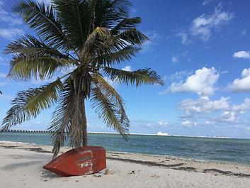 palm-tree-progreso-yucatan-mexico.JPG