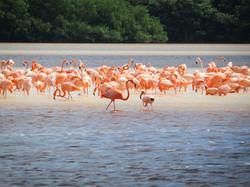 Celestun-Yucatan-Mexico-Flamingos