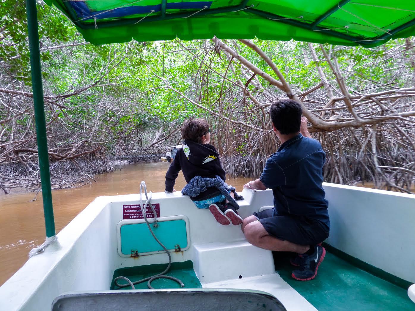 Celestun-mangroves