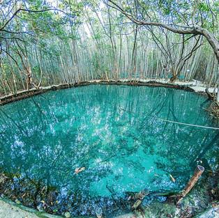 El Corchito cenote. Progreso Yucatan