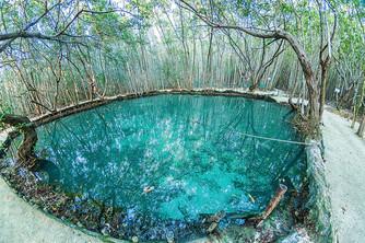 Cenote-del-Corchito-5.jpg