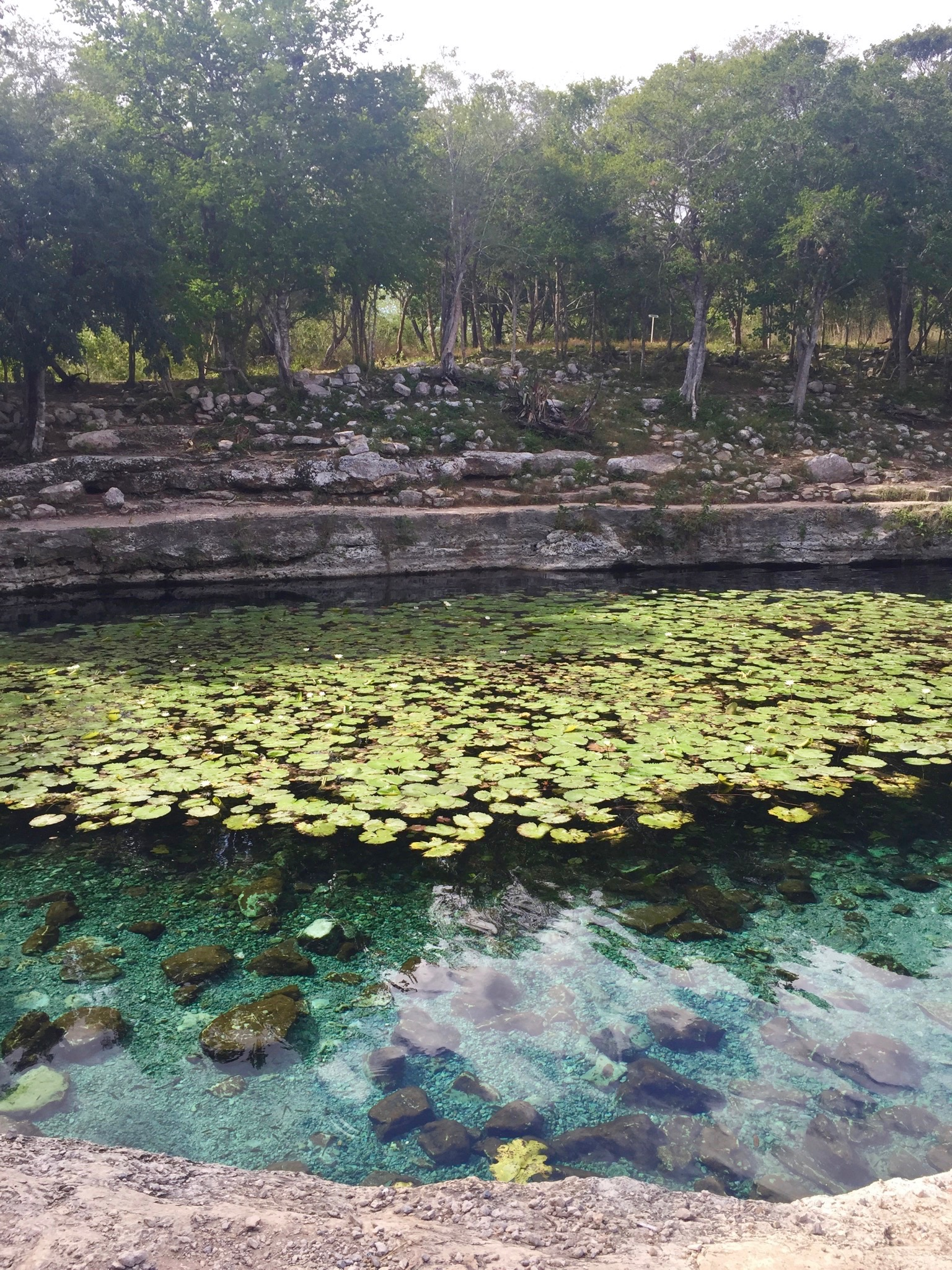 mayan-ruins-cenote-Xlakah-Dzibilchaltun-mexico