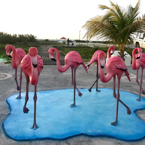 flamingos-art-progreso-merida-yucatan-me