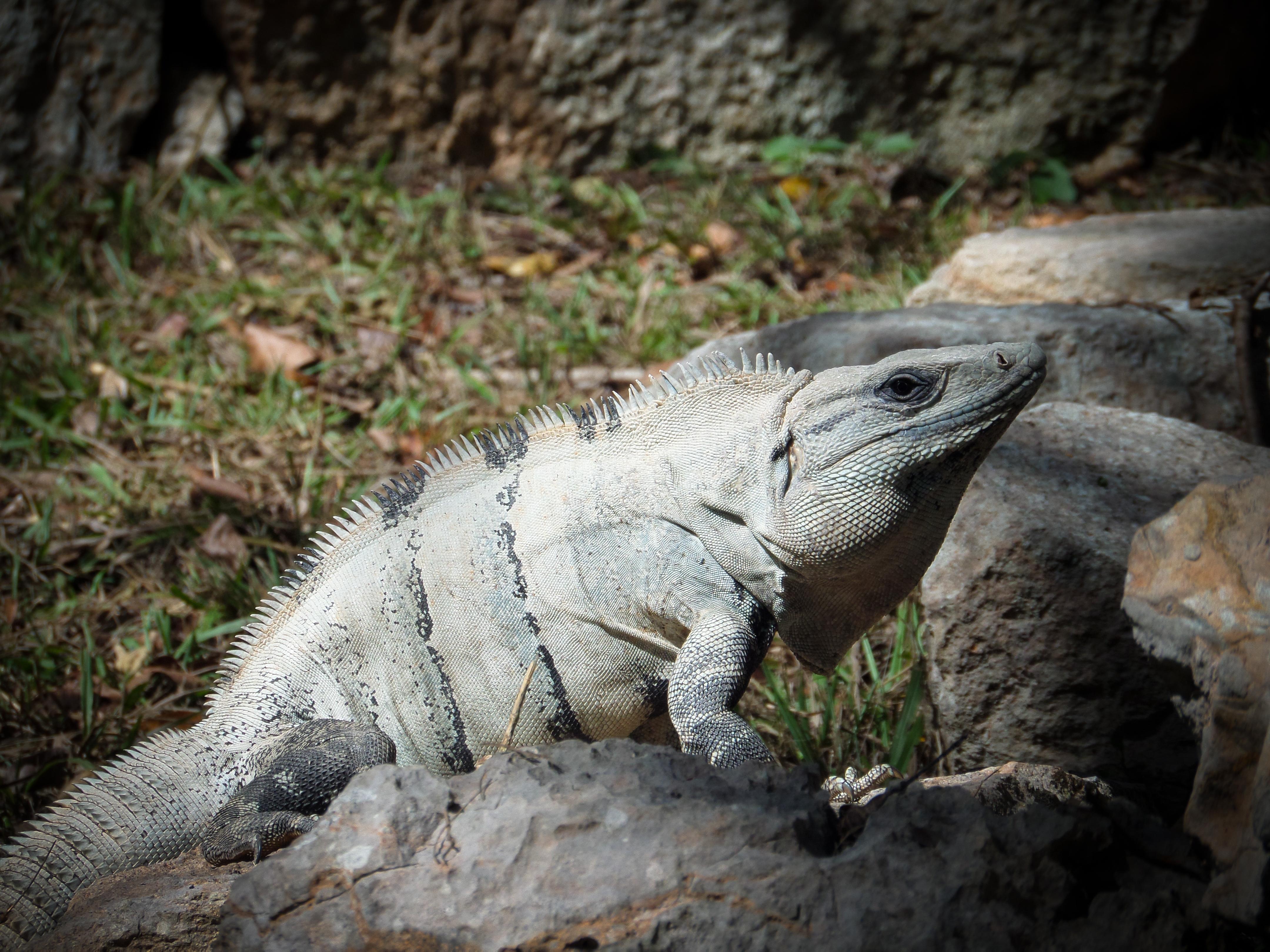 Uxmal-yucatan (12 of 63)