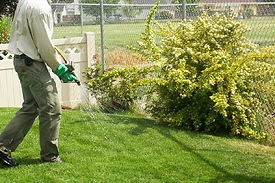 weed spray.jpg