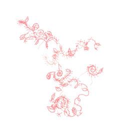 rosa naht