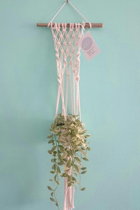 Mini Plant Wall Hanging