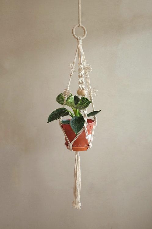 'Dragonfly' plant hanger