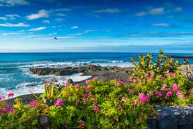 Buntblühende Blumenpracht am Meer