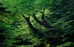 Green Grove of Trees