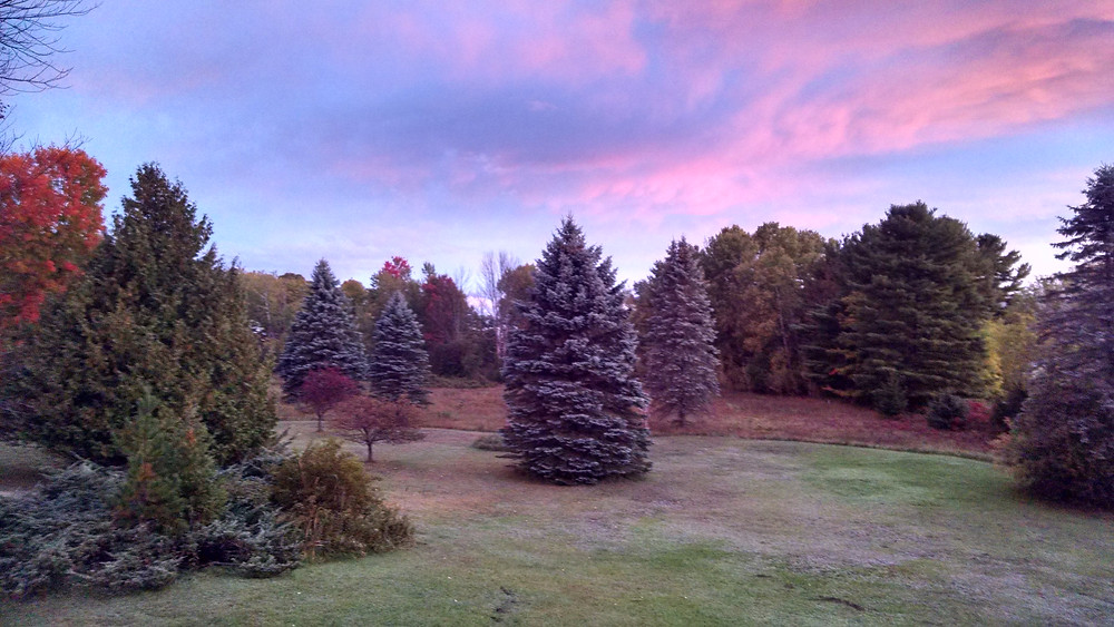 View from the back porch