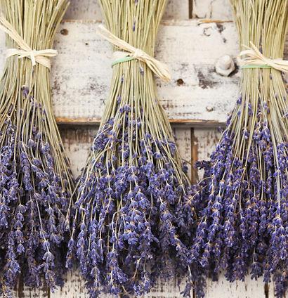 LavenderBunches_600__00313.1463683947.12