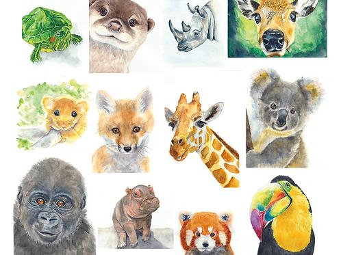 12 Animal Notecards
