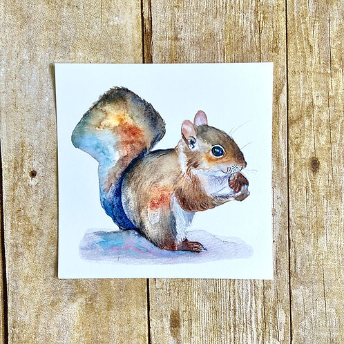 Judy the Squirrel